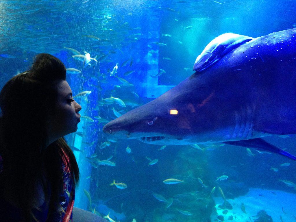 tokyo aquarium japan squale